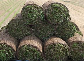 Roll of Turf (1m2)